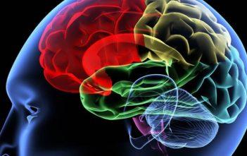 العلماء الذين يعملون على جهاز ذاكرة يشبه الدماغ